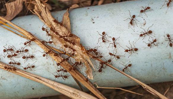 Anti-fourmi naturel : sélection de solutions efficaces et conseils