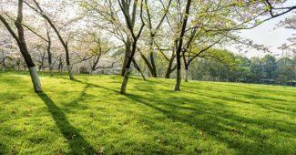 Comment aérer le sol du jardin : conseils pratiques et astuces